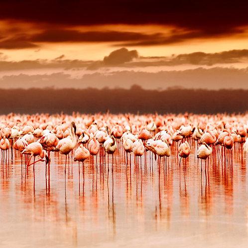 Flamingo Delight