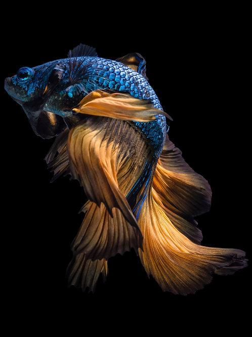 Orange & Blue Mystica