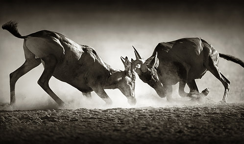 The African Wild Life Collection l