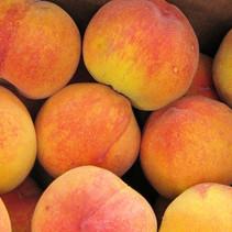 fruit - Peaches1.jpg