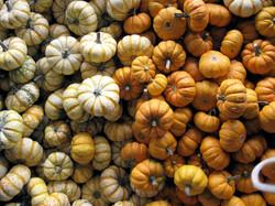 MiniPumpkins