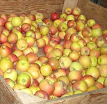 Apples5_edited.jpg