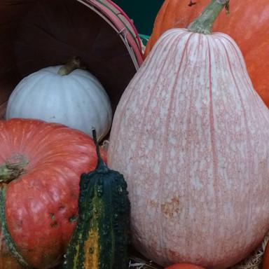 October - pumpkins9.jpg