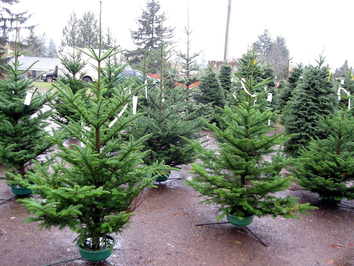 xmas - tree