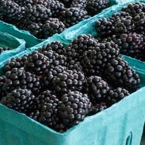 Berries - Marionberries.jpg