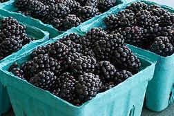 Marionberries.jpg
