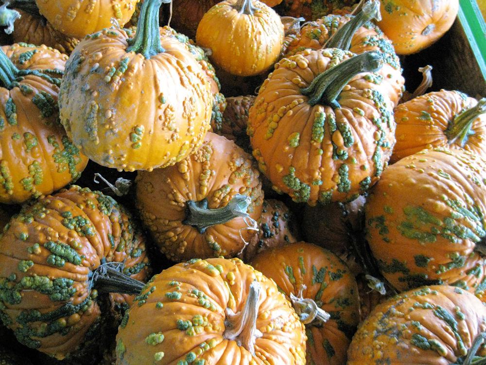 October - pumpkins12