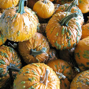 October - pumpkins12.jpg