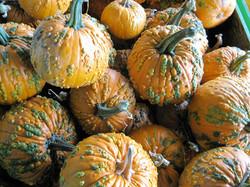 WartPumpkins