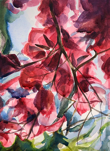 "Watercolor painting, ""Bougainvillea"""