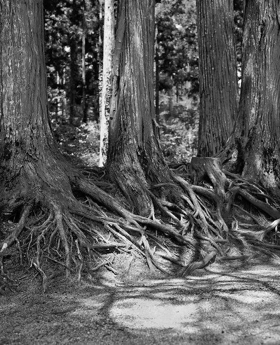 alberiprinbnw check copy.jpg