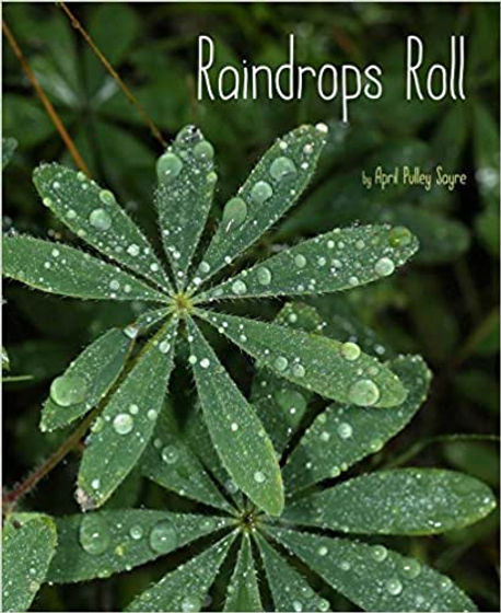raindrops roll book cover.jpg