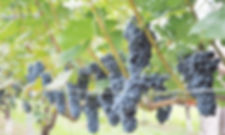 winebiyori_m_1