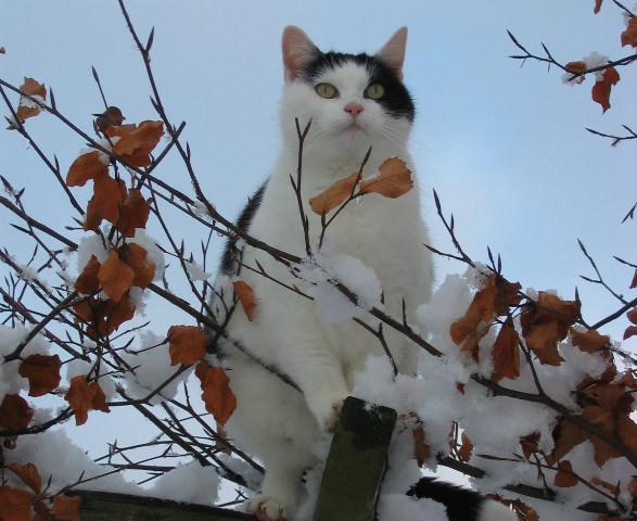 Katze Finchen
