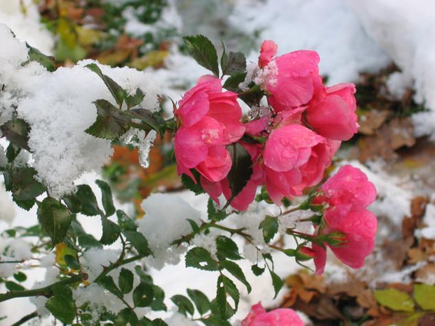 Winter-Rosen
