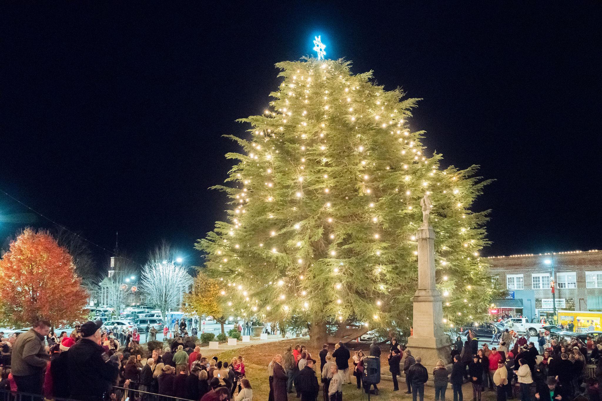 North Carolina\'s Largest Living Cedar Christmas Tree