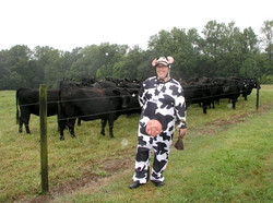 run with cows event pic