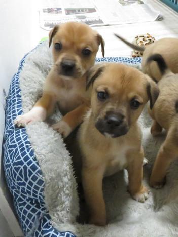 a littler full of puppies