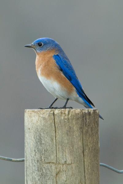 small bird on trail