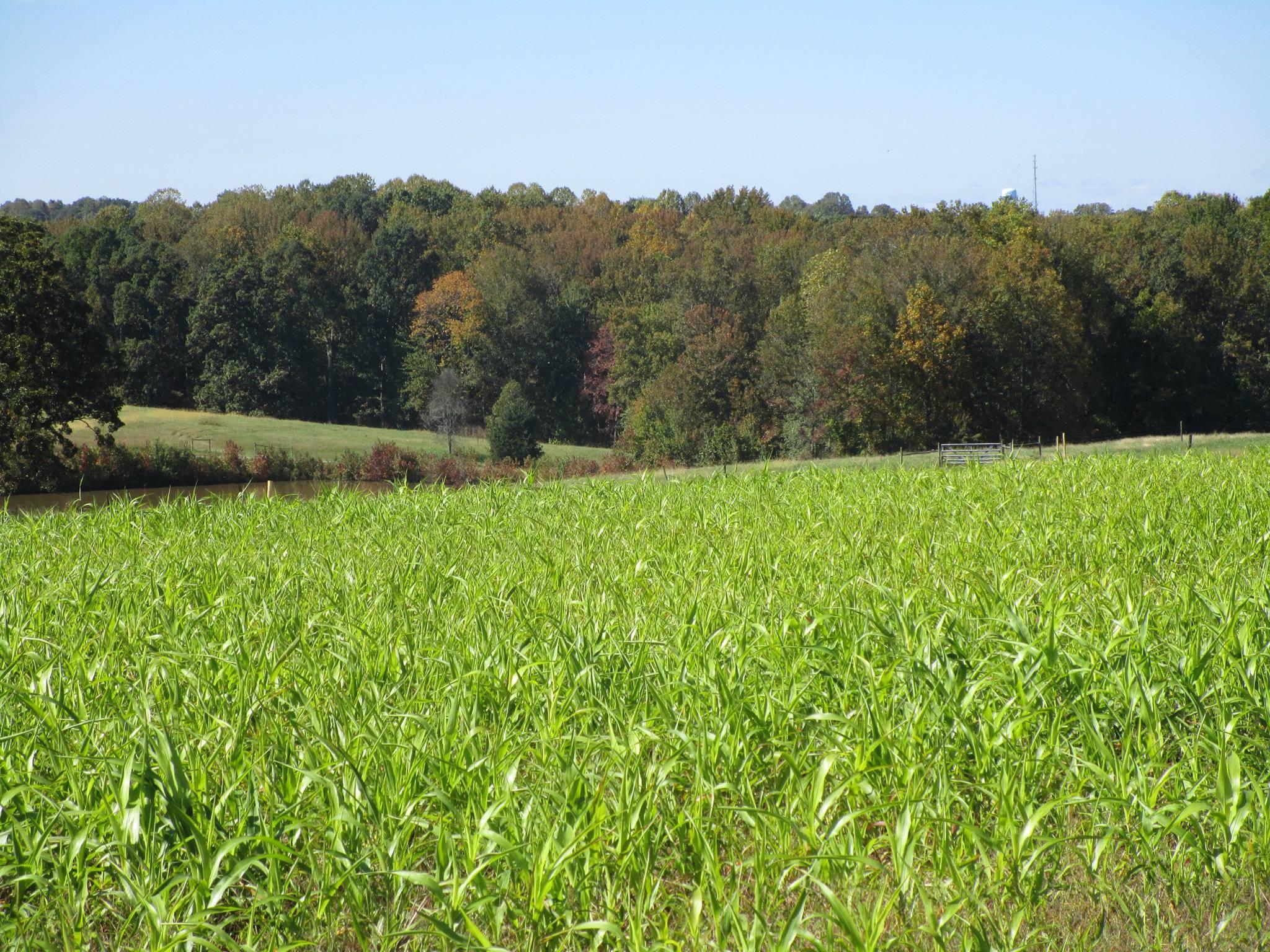 landscape shot of trail