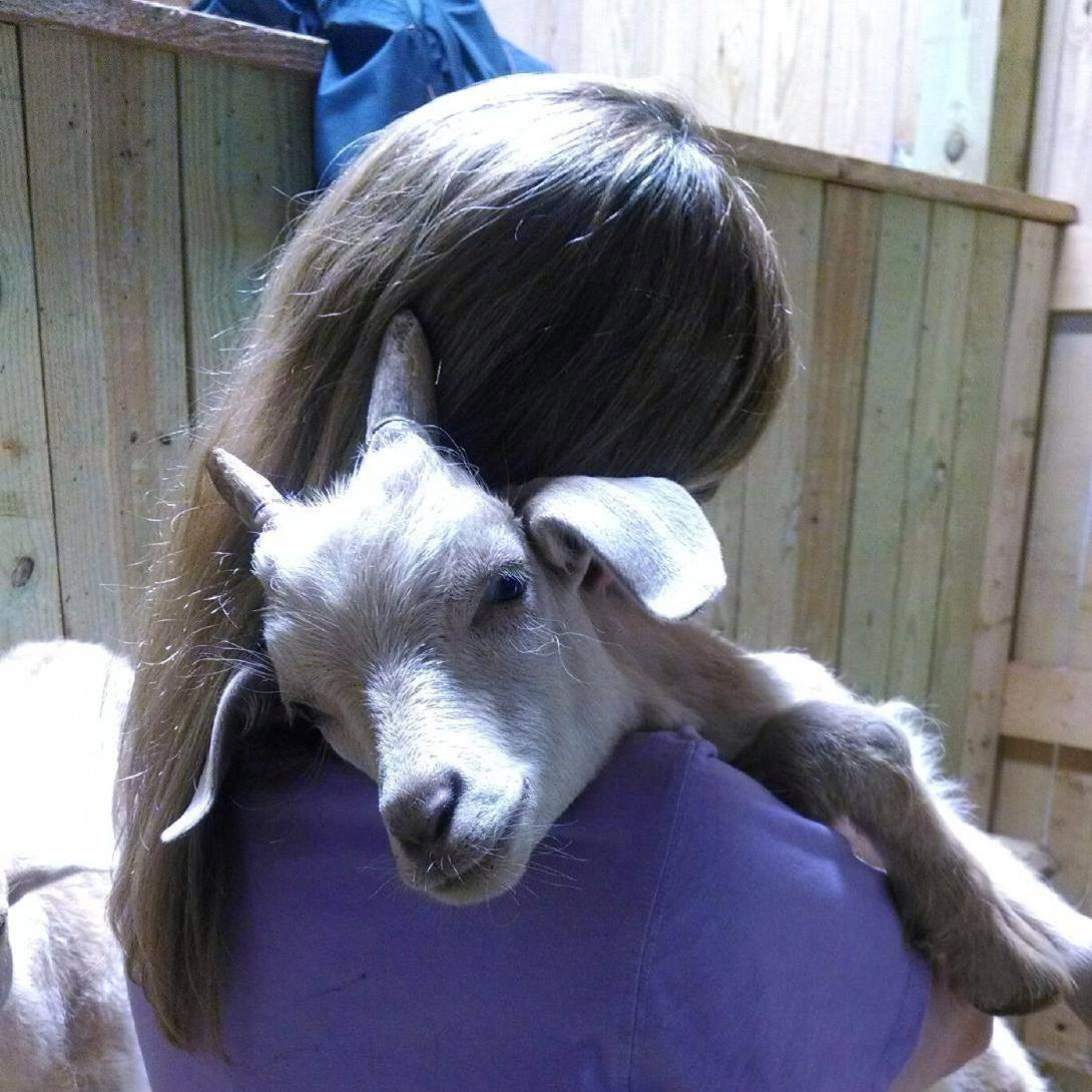 Visitor hugs baby goat