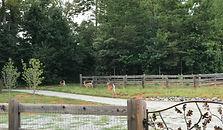 Wildlife at Cherry Mountain Farm