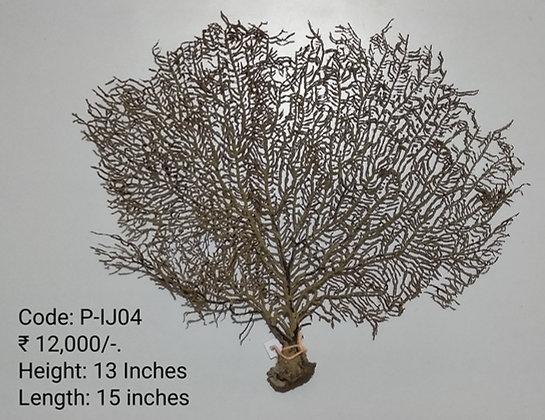 Maha Indrajal (P-IJ-04)