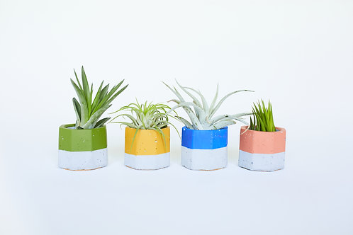 Painted Vessel with Air Plant