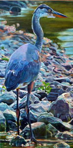 Kelly McNeil Great Blue Heron 15x30 oil.