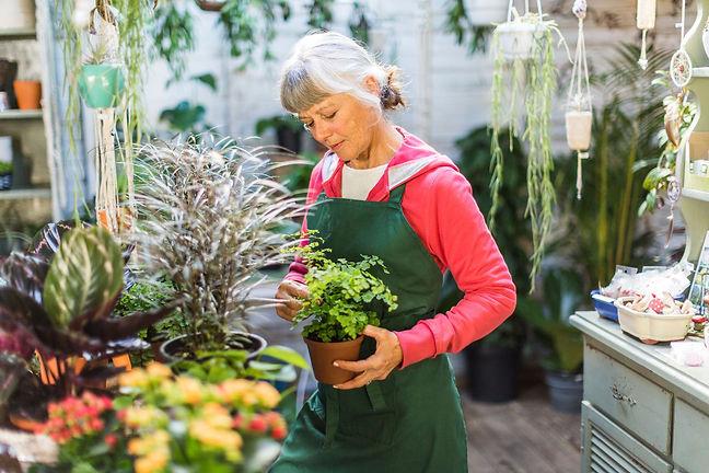 senior-woman-working-in-a-garden-shop-ro
