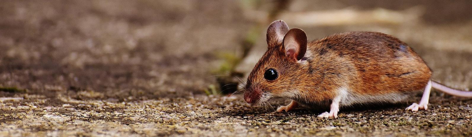 mouse-1708379_1920.jpg