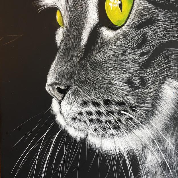 """Lee Calver-Guy """"A Cat's Gaze"""""""