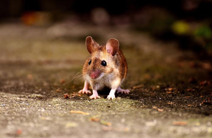 mouse-2308357_1920.jpg