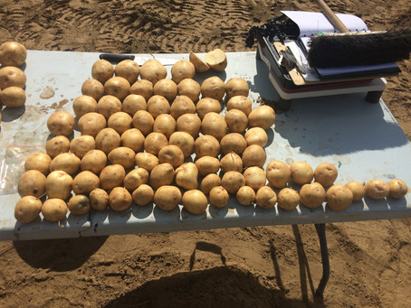 A Great Day for Canadian Garlic and Potato Growers