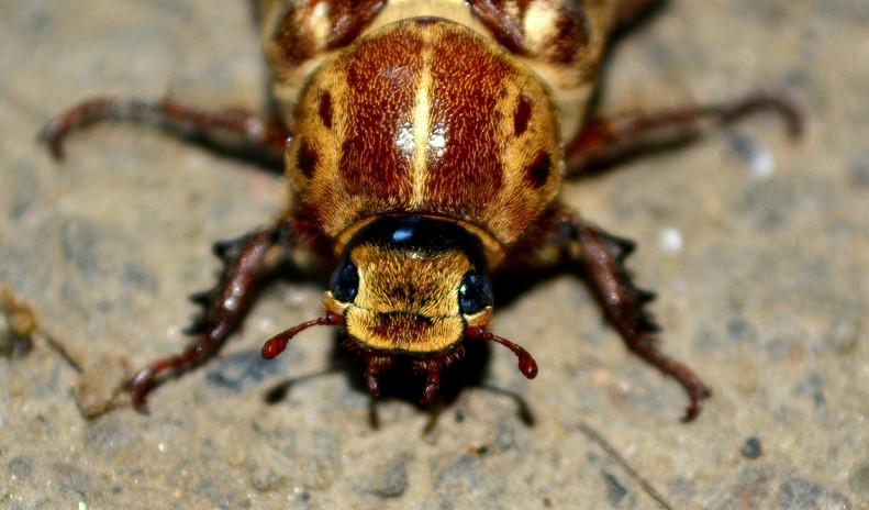 cockroach-476408_1920.jpg