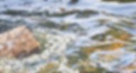 Anne Sutton-SplashOfSummer_banner.jpeg