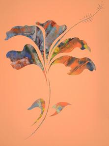 Hibiscus, 2014.