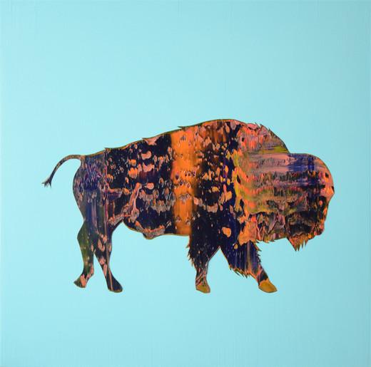 Where the buffalo roam, 2013.
