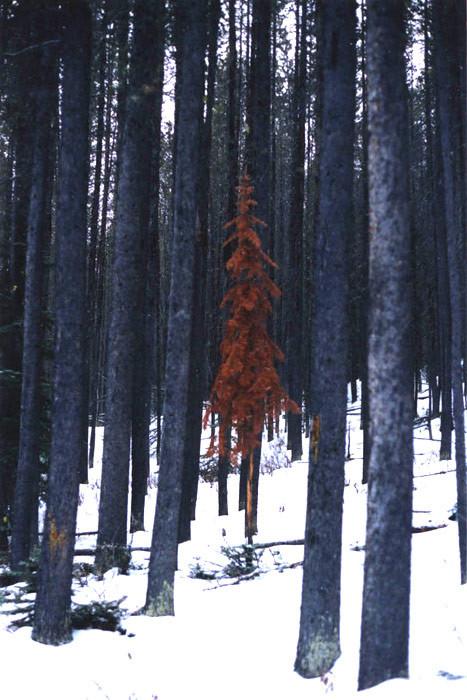 Banff, Alberta. 2000.