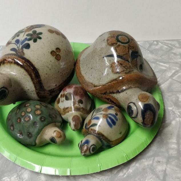 Turtle family