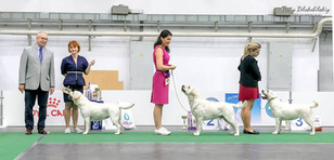 Labrador retriever Special CAC Show Kyiv  Best junior yellow female , best junior female all colors, BEST JUNIOR 11 MONTHS!