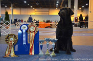President Cup CACIB 01.12 - ex., CAC - finished the Hungarian Champion!
