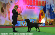 IDS in Chisinau, Moldova (17.12.16 - 18.12.16) Tobias My Jewel Unreal Black&Chocolate Class: Intermedia 3xCAC, 2xBOS, CACIB!!!