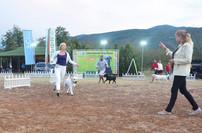 Adele Fairyland Bucher is now CHAMPION OF BULGARIA! IDS Asenovgrad (04-05.09.17) 04.09 - CAC, CACIB, BOS 05.09 - CAC, CACIB, BOS