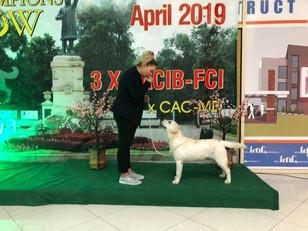 IDS Chisinau, Moldova (13.04.2019) Very Promising, Best Puppy, BIS-2