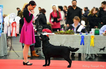 International Dog Show CACIB 2015 in Nürnberg (Germany) 10.01.2015 Mark: Excellent! 3rd place (intermediate class) Judge: Patrick Ragnarson (Sweden)