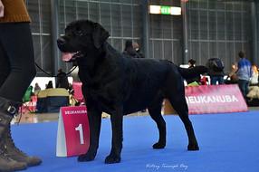 International Dog Show DUO CACIB Brno (Czech Republic) 08.02.2015 Mark: CAC, Excellent Title: Champion of Czech Republic Judge: Linda Volarikova (Slovakia