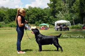International Dog Show in Chisinau, Moldova (10.06 - 11.06)  11 Июня/June, 11th: CACIB: CAC, CACIB! CAC-MD: CAC, BOB, BOS  10 Июня/June, 10th: CACIB: CAC, R.CACIB