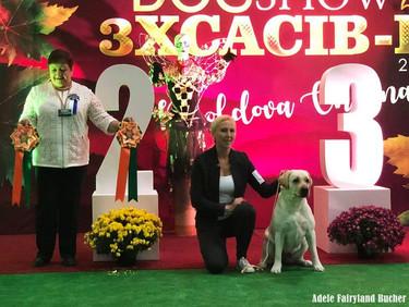 Dog Show in Chisinau, Moldova (02-03-04.11.2018) 02.11.18 - CAC, R.CACIB 03.11.18 - CAC, CACIB, BOB, BIG-2! 04.11.18 - CAC, R.CACIB
