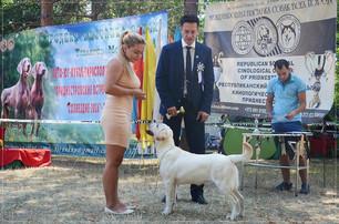IDS Tiraspol, Moldova - 6.08.16 (CACIB-FCI) VP, Best Puppy!  IDS Tiraspol, Moldova - 7.08.16 (CACIB-FCI) VP, Best Puppy!